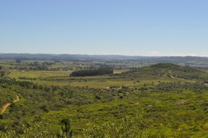 Uruguayan Countryside