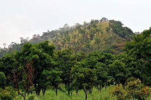 Savanna, North Ghana Photo Credit: CIAT via Wikimedia Commons